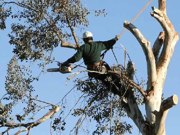 Costo-Tree-Climbing