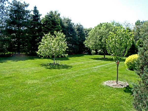 Offerte-giardinaggio-Forli