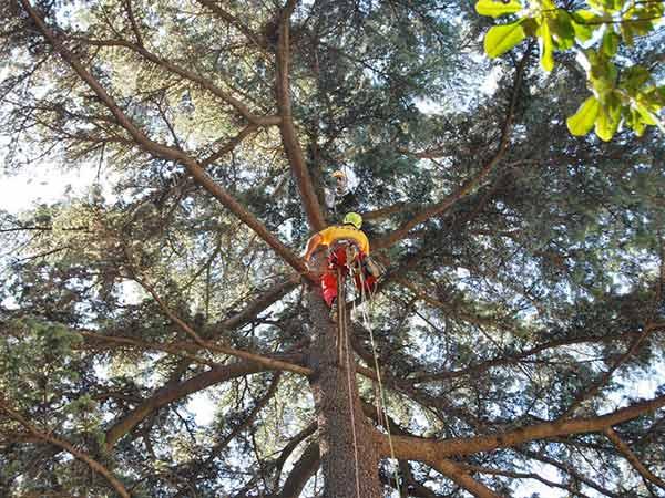 Offerte-manutenzione-alberi-Forli