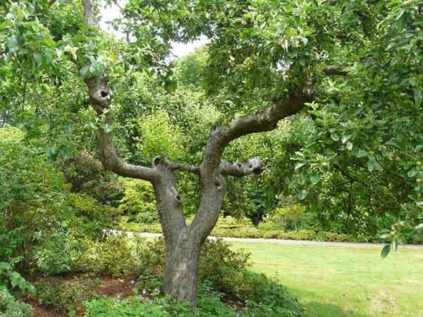Potatura-alberi-di-grandi-dimensioni
