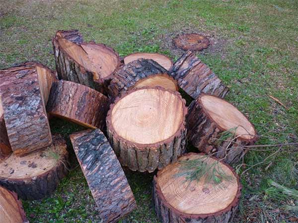 Prezzi-Abbattimento-alberi