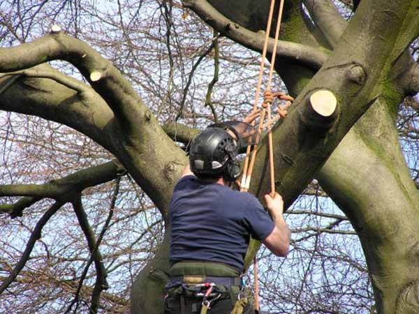 Prezzi-Giardiniere-Abbattimento-alberi-treeclimbing-Cesena