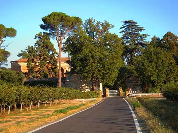 Prezzi-potatura-alberi-secolari-Forli