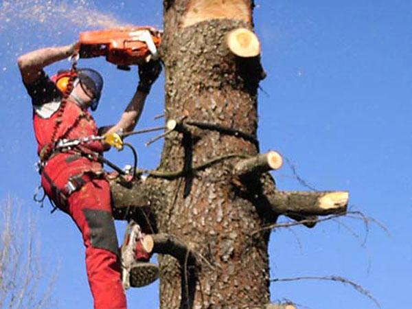 Sconti-potatura-tree-climbing-Faenza