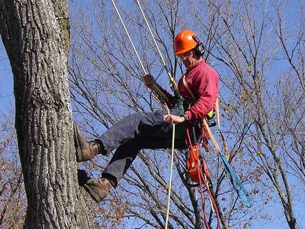 Servizio-urgente-taglio-alberi-danneggiati-Forli